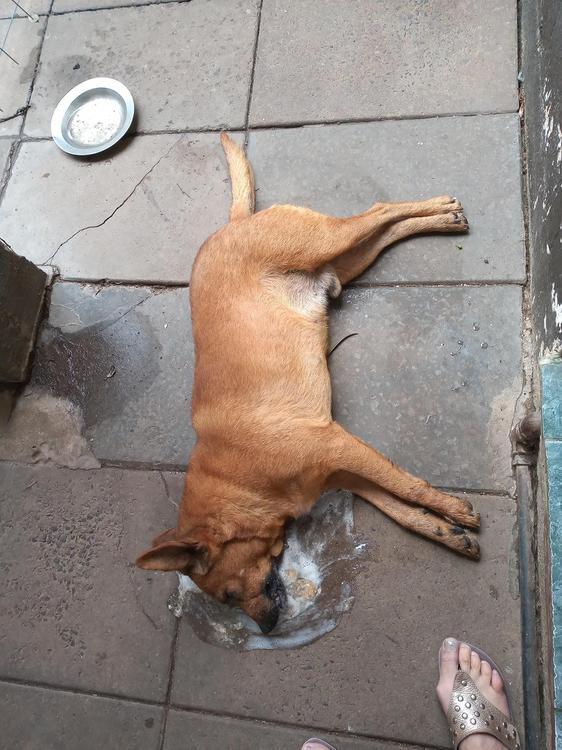 Envenenamiento-de-perros-20-07-12-01